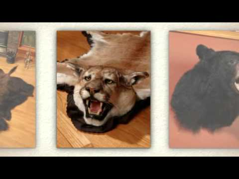 Taxidermy Mounts And Rugs From Bear Skin World Youtube