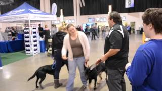 Service Dogs Earn Cgc Titles