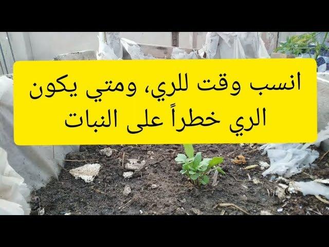 افضل وقت لسقي النباتات وكيف اتأكد من جفاف التربه تطبيق ازرع سطحك Youtube