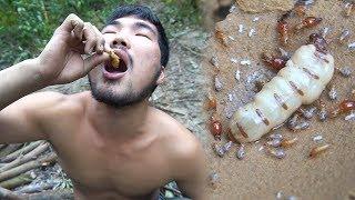 Survivre dans la nature ! Mangez des insectes pour survivre