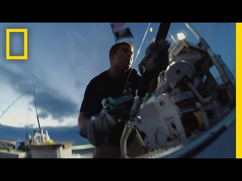 Catch of the Week - Hat Trick for Hard Merch | Wicked Tuna