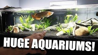 my-largest-aquariums