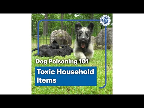 Dog poisoning 101 - Toxic household items