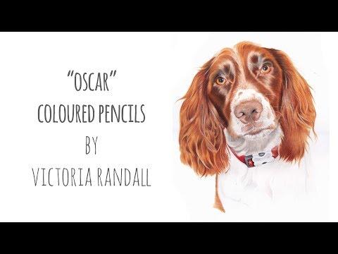 Coloured Pencils Dog Portrait | Oscar the Springer Spaniel
