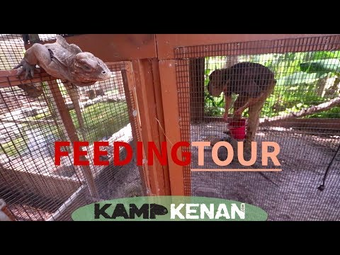 Reptile Feeding Tour at Kamp Kenan