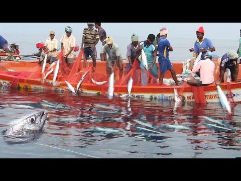 Wow! Amazing - Fisherman Sort Their Big Net Catch Kona Fish