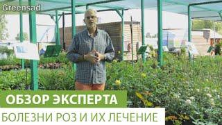 Болезни роз и их лечение(Болезни роз В этом видео наш эксперт расскажет о болезнях роз. Купить саженцы роз можно здесь http://greensad.ua/categor..., 2015-08-06T12:32:26.000Z)