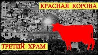 Красная Корова - Третий Храм (запись трансляции)