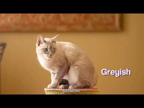 Pet Cat In FUR mercial / соціальна реклама про притулки / Ukrainian subs