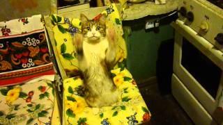 Дрессированная кошка The trained cat Iza 1
