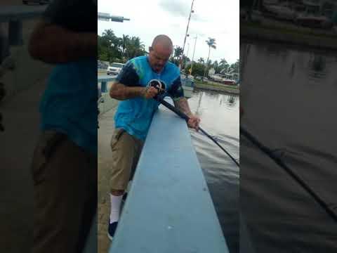 Matlacha bridge fishing goliathgrouper