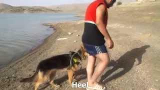 Toronto Akclub Dog Training