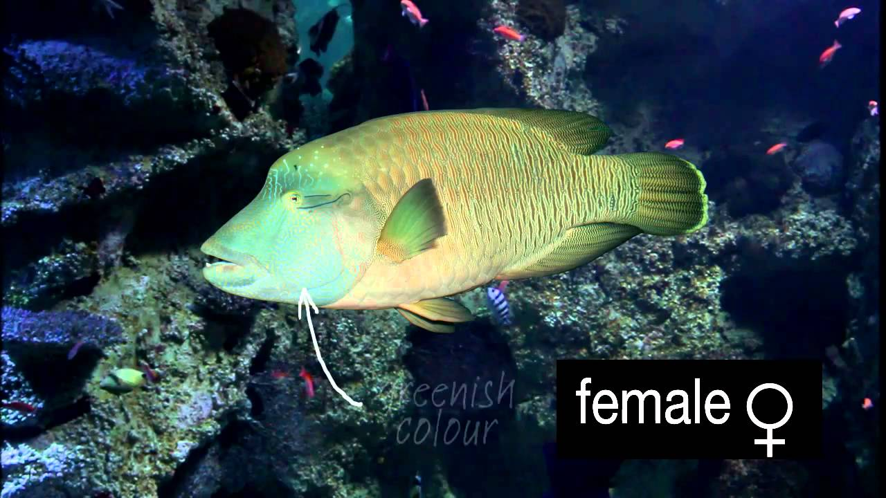 Fish that change sex