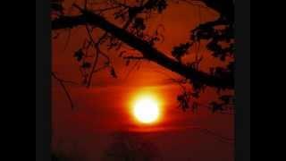 Negramaro - Sole -