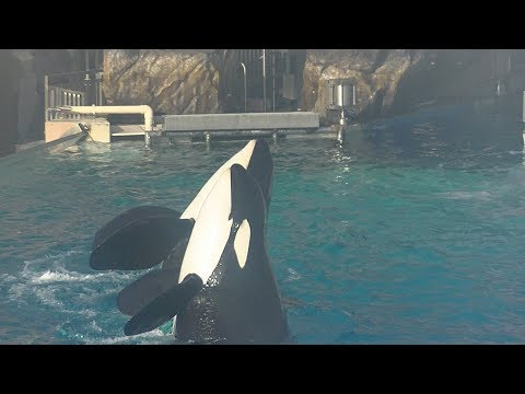 Orca Encounter (Full Show/Center) Jan. 12, 2018 - SeaWorld San Diego
