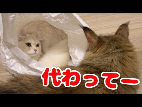 猫のビニール袋チャレンジ