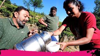 South India Tea & Fermented Rice in World's HIGHEST ELEVATED Tea Plantation | Munnar, Kerala, India