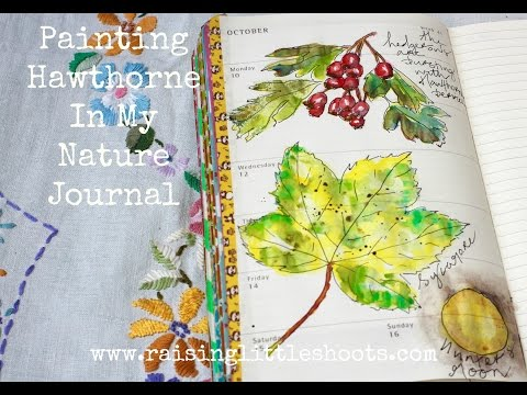 Painting Hawthorne In My Nature Journal