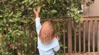 Ça vaut la peine de visionner jusqu'à la fin ;) Bouquet de kale, concombres et pommes du jardin plus un citron bio (qu'on garde avec sa peau). Ses bienfaits ...