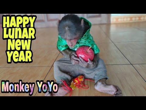 Monkey Baby YoYo Welcomes Happy Lunar New Year