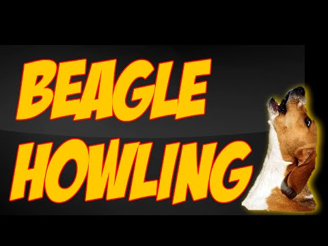 beagle meetup with howling contest and peanut butter tree game | Carol Vinzant