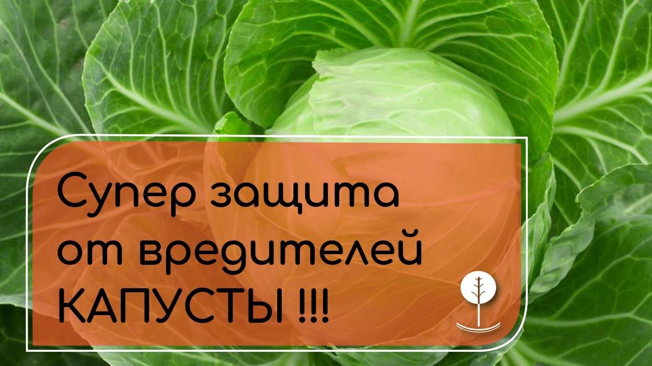 СУПЕР ЗАЩИТА капусты от вредителей - ТВИКС!!!