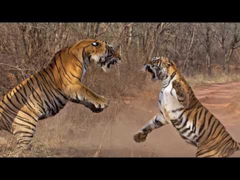 Magical Biodiversity of India, Dr. Asad Rahmani and Dhritiman Mukherjee at #NatureInFocus