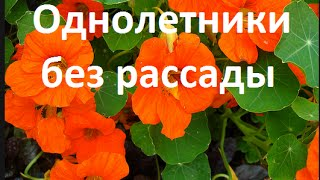 видео Вьющиеся растения для балкона: быстрорастущие, многолетние и однолетние цветы