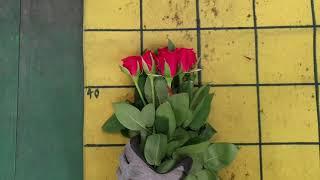 [인터넷꽃도매시장]레드폴장미 3등급 꽃집 꽃집창업 부산…