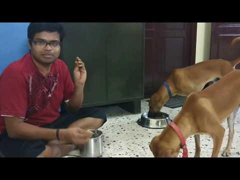 Kombai Stars Neriyan&Kurumbi Video-27 Food Aggression prevention
