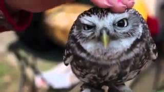 Массаж головы птицы совы, приколы про животных онлайн бесплатно
