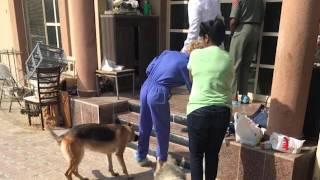 بالفيديو.. أوروبية تحتجز 130 قطًا و11 كلبا و3 سلاحف دون طعام في دبي