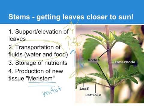 Plant Evolution- a short AP Bio version