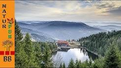 Wanderung zur Grindenhütte am Mummelsee  im Schwarzwald