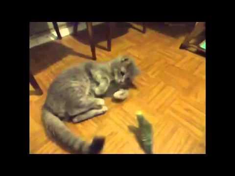 Попугай который разговаривает с котом