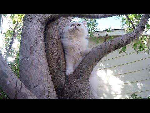 16 09 02 Persian kitten, Sitka, masters The Tree