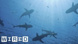 Using Shark Skin To Fight Against Bacteria | Think Like A Tree