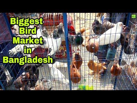 Biggest Bird Market In Bangladesh