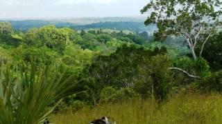 Bamboo & Teak Farm for sale