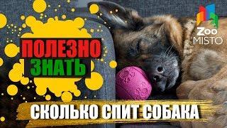 Полезно знать с ZooMISTO | Сколько спит собака