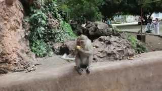 Monkey Island In Thailand | Germanizing Retro Vlogs | 61