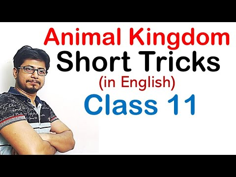 Animal Kingdom Tricks