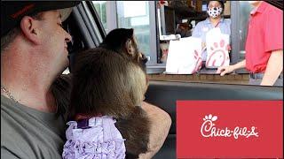 Monkey Princess Visits Chick-Fil-A  Drive Thru!