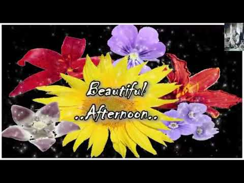 Sweet Good Afternoon Video Good Afternoon Wishes Greetings Sweet