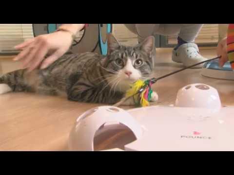 Un Hôtel pour Chats à Marseille équipé de webcams pour suivre les vacances de son chat !