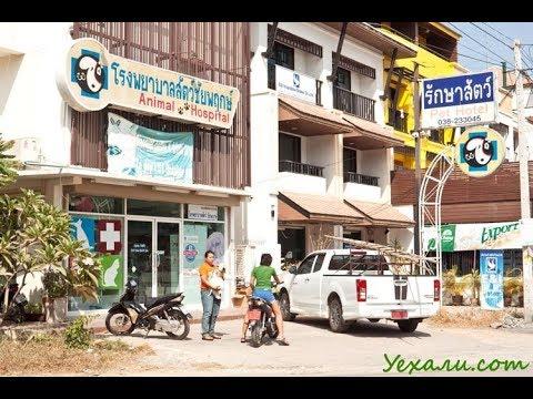 таиланд паттайя 2018  ветеринарная клиника документы на вывоз из таиланда