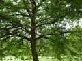 hindi poem- Plant more trees & save the Environment, हिन्दी कविता- पेड़ जिंदगी, पेड़ बंदगी