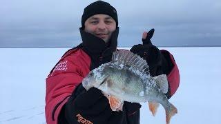 Зимняя Рыбалка на Окуня на Чудском озере. Открытие сезона 2017.