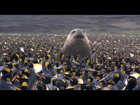 Penguin Baywatch (Wildlife Documentary)