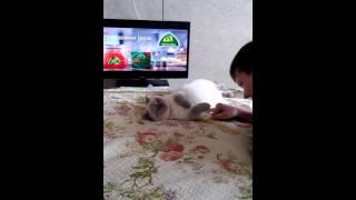 Кошка и несвежее дыхание :)))